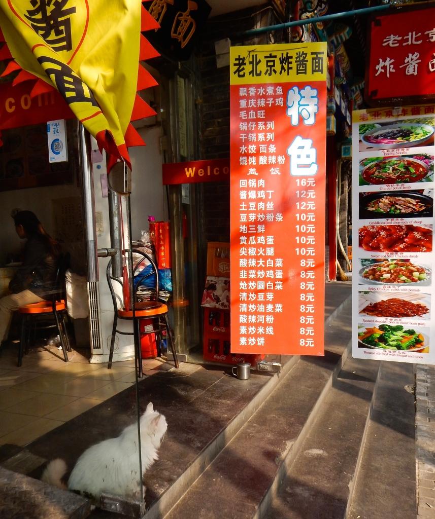 cat, beijing, China, Chinese food
